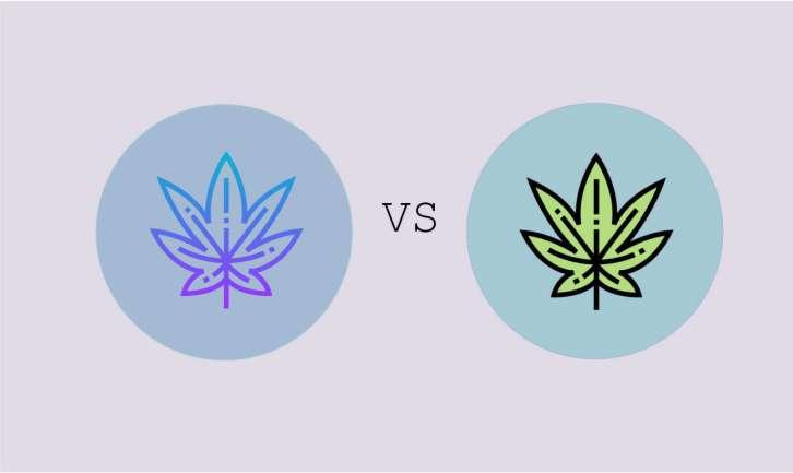 Image of CBD-Tropfen vs CBG-Tropfen